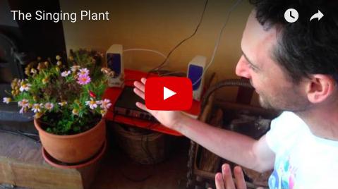 Singing Plant at Moinhos Velhos Juice Detox with Richard Brook